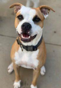 Goro - Adopted Sep 2019